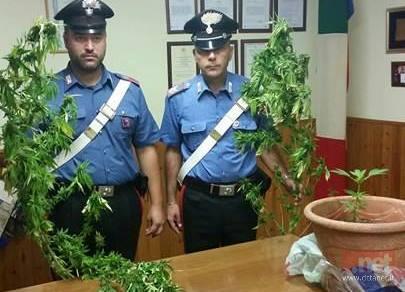 Le piante di marijuana sequestrate