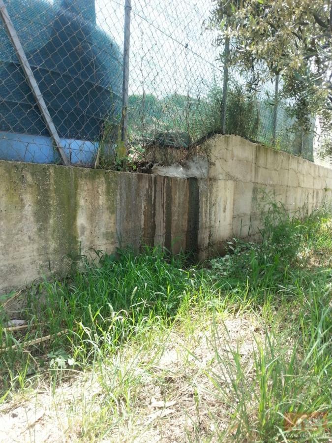 Nella fotografia il percolato che fuoriesce dal sito e finisce in un terreno di ulivi. Alcune piante sono ormai secche