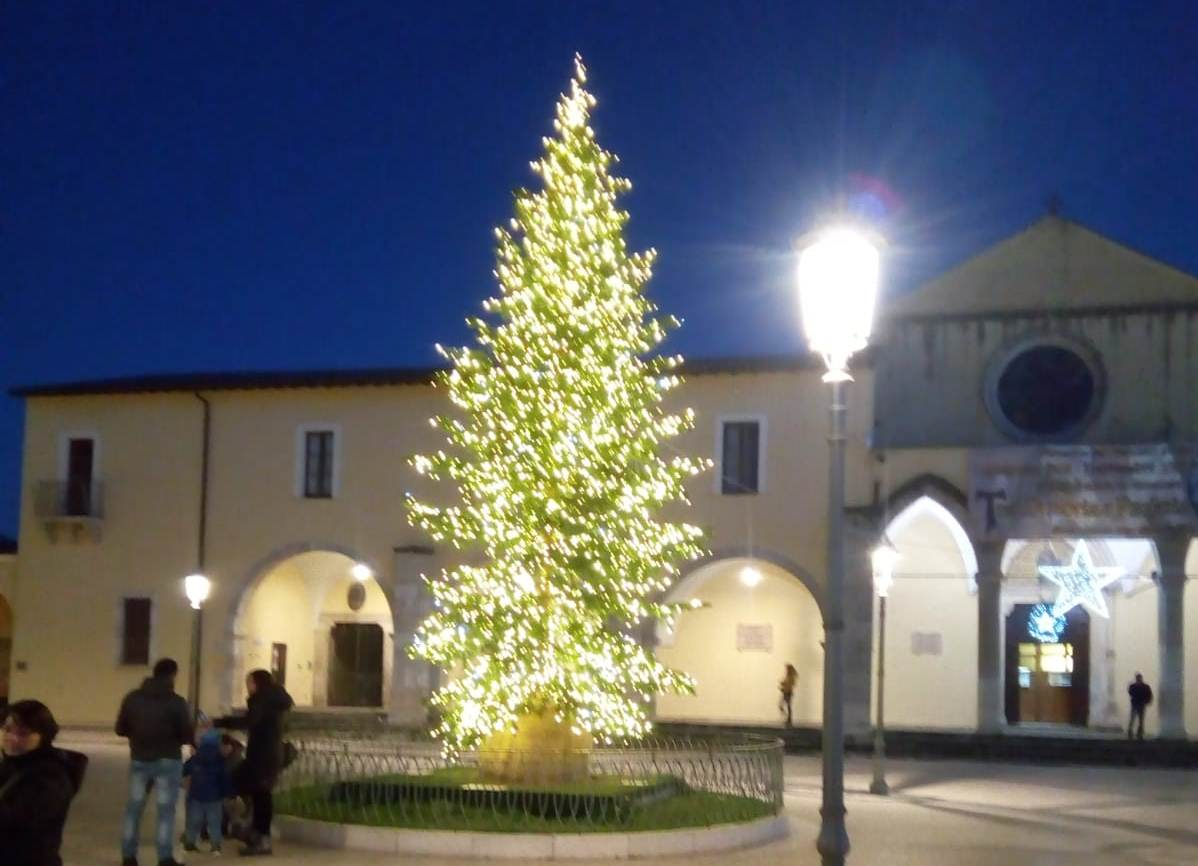 Appuntamento all'albero di San Francesco